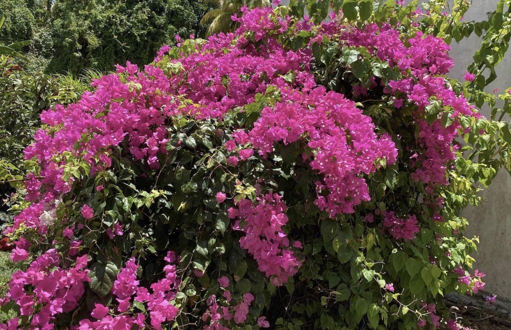 Fleurs Villa Mad Carl