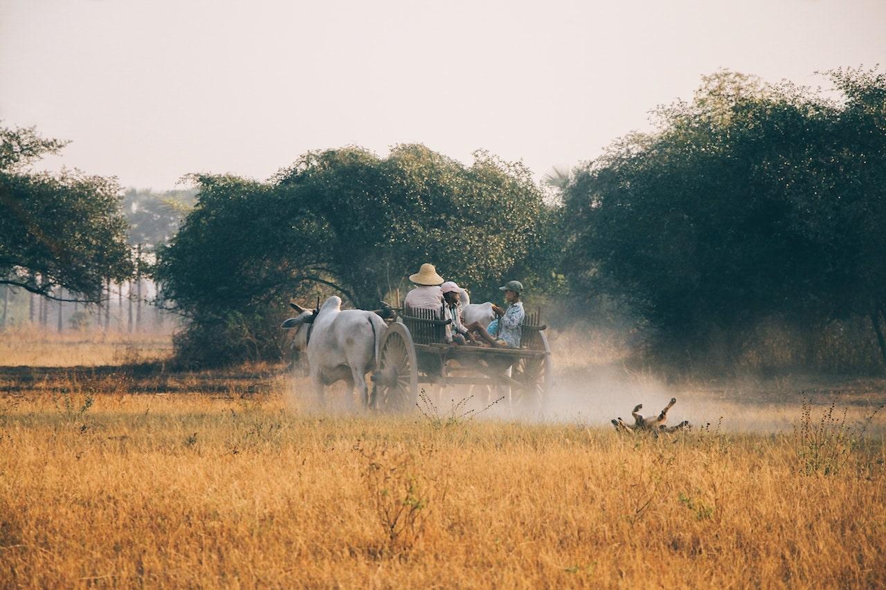 Agriculture Birmanie