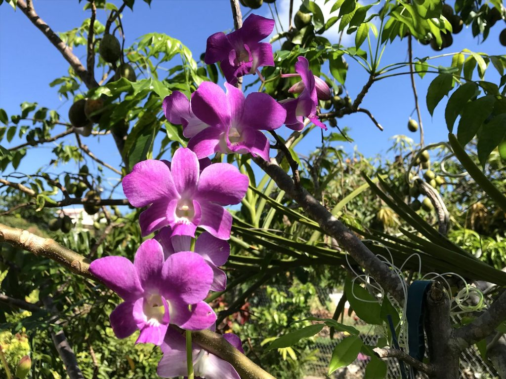 Orchidees residence Elmire
