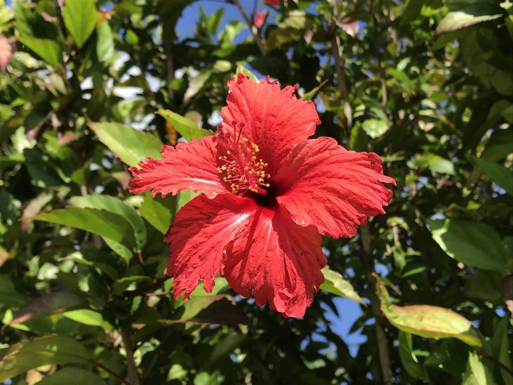 hibiscus Residence Elmire